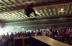 JASA SKATEBOARD スクール&デモンストレーションin『MAD Ollie 2013 powered by monster energy』@石巻Onepark MOVIE UP!!!